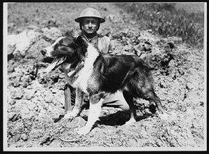 messenger dog during World War I