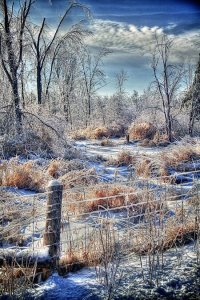 Ice Storm Photo by Richard Torcato