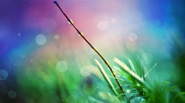 nature_heaven-HD