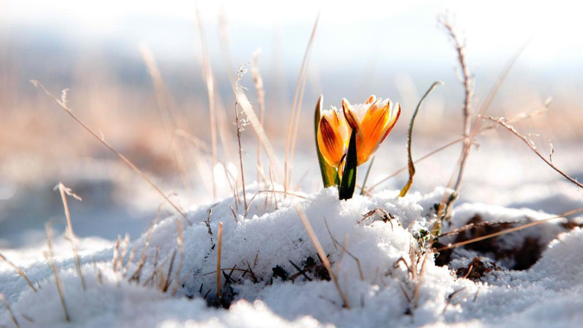 How wildflowers teach us three spiritual lessons in the darkness of winter