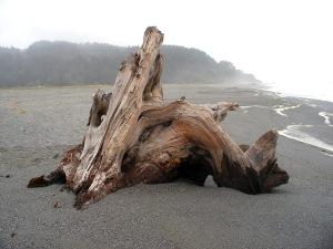 humboldt-driftwood